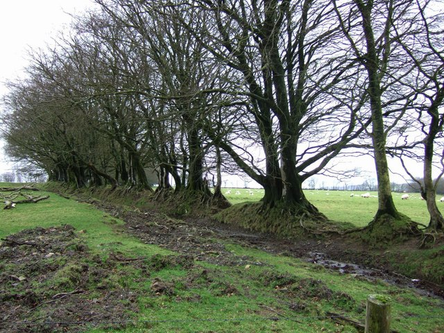 Field boundary near Okehampton Camp