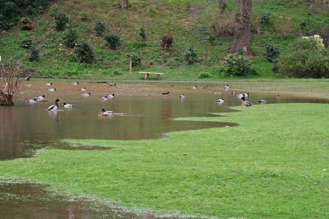 The Duck Pond, Mount Edgcumbe Park