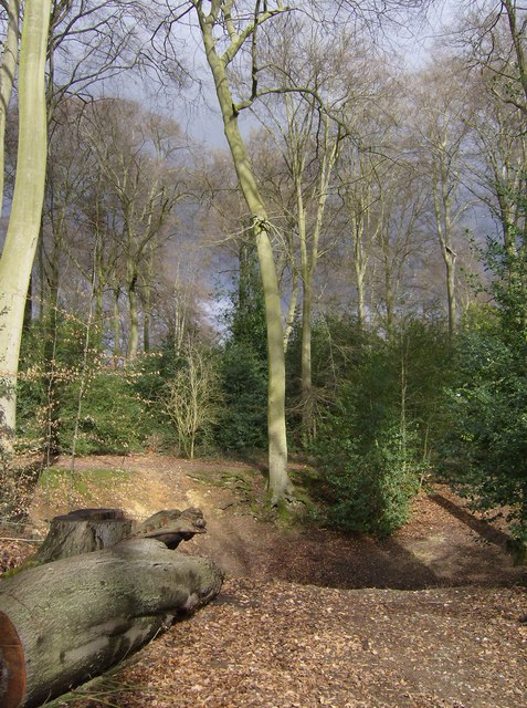Old lime pit in Bardolph's Wood