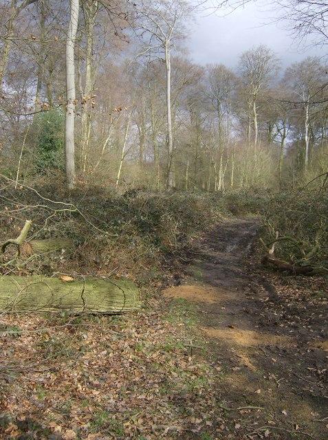 Bardolph's Wood