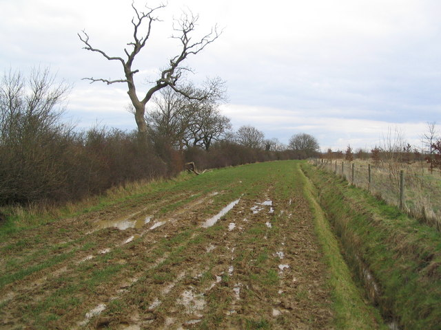 Broad bridleway running east to Prior's Coppice