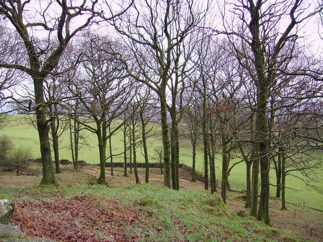 Woodland, Foxfield