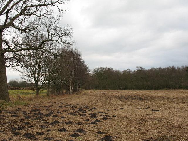 Birch Wood, Sutton on the Forest parish.
