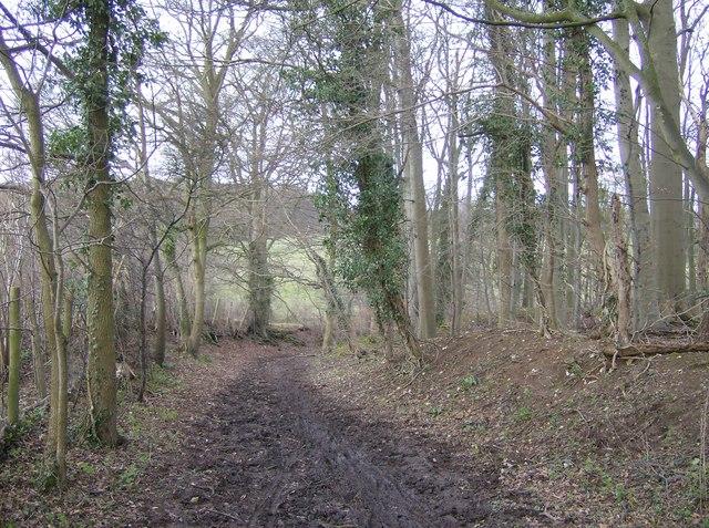 Bridleway north of Cross Lanes