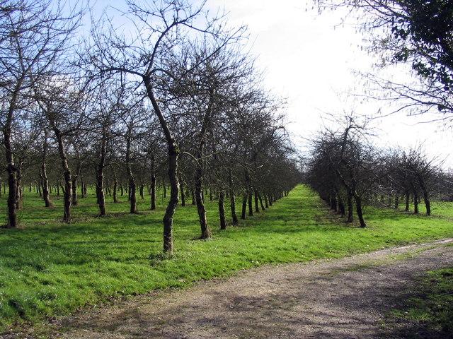 Orchard at Elwell Farm, Waytown.