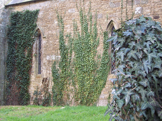 Ivy, St Michael and All Angels Church, Stour Provost