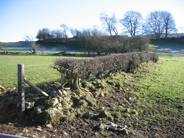 Hedge Line near the Clwydian Way