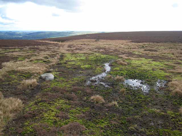 Sphagnum moss and moorland above Thornhope House
