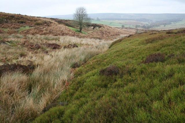 Stream junction, Warren Moor