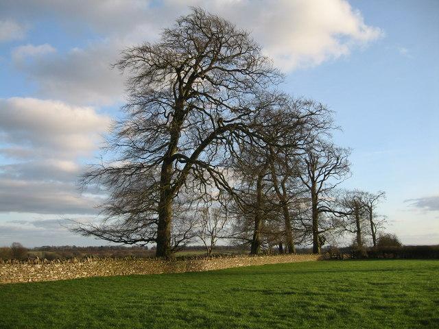 Gloucester Beeches