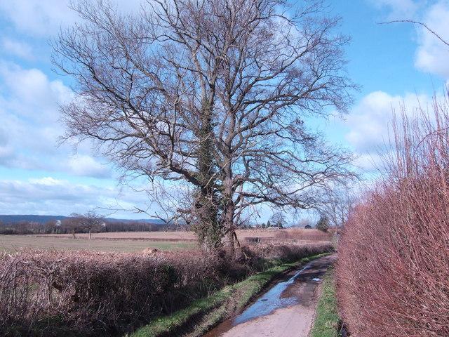 Lane near Clehonger