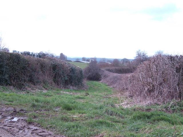 Green lane near Swinmoor