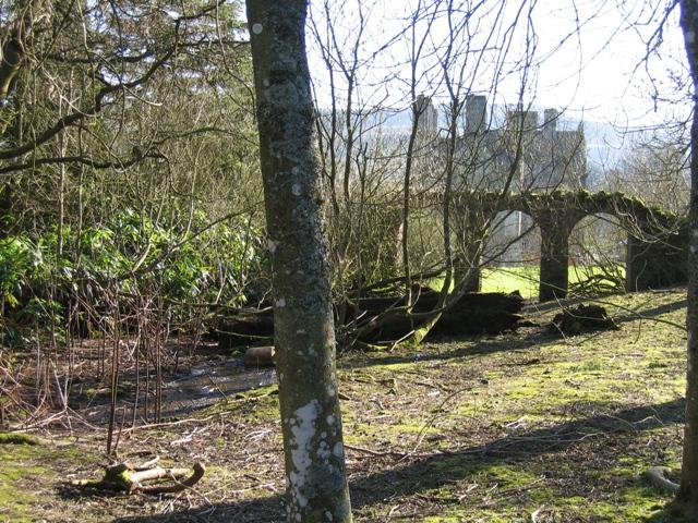 Woodland behind Bodidris Hall Hotel