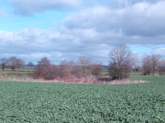 Unmarked pond