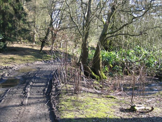 Woodland Track near Bodidris Hall Hotel