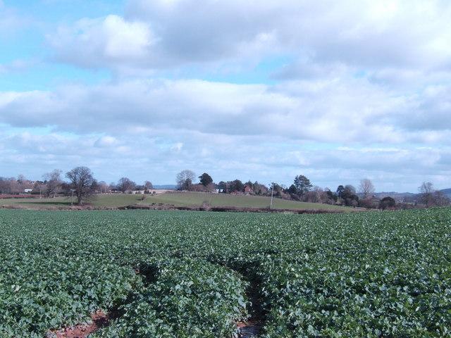 Across the fields to Thruxton
