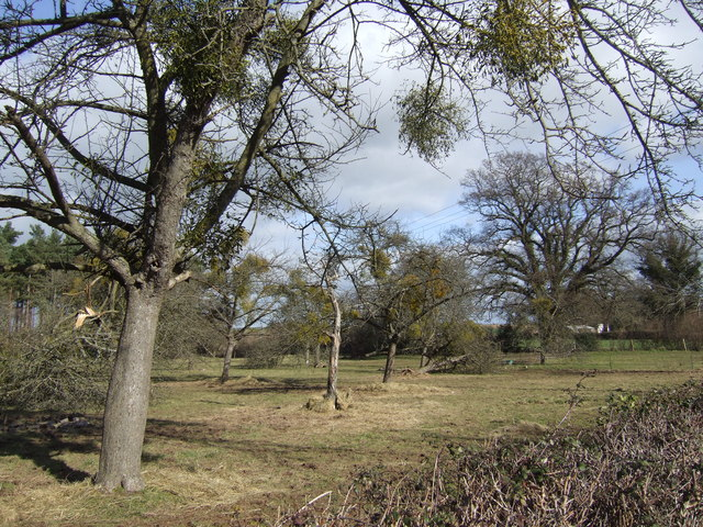 Old cider orchard at Grithill