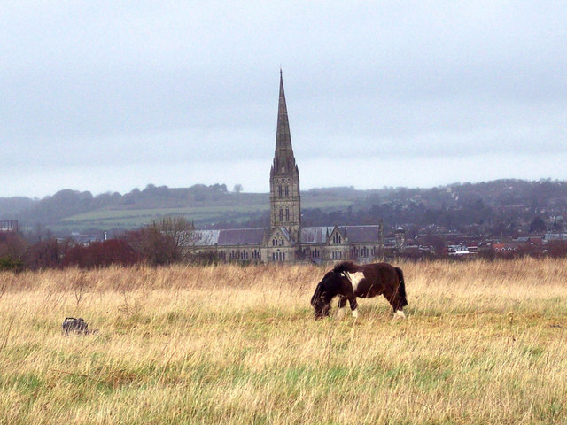 Tethered pony with Salisbury Cathedral in the distance