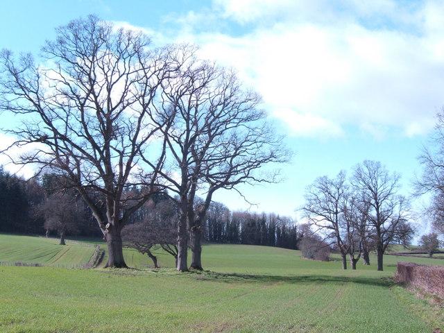 Late winter treescape