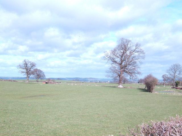 Pasture below Cockyard Farm