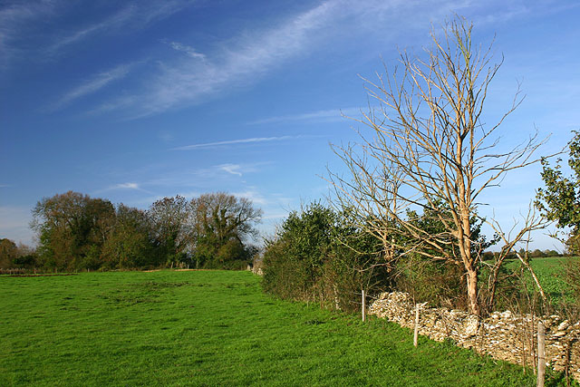 Field near Alvescot