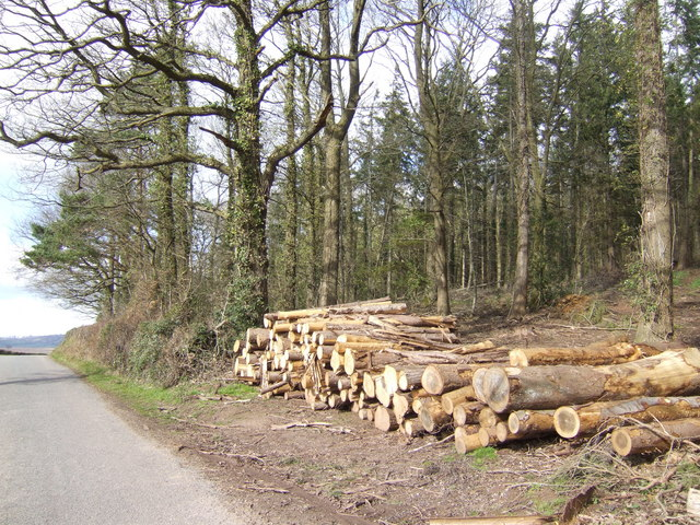 Logging in Nell's Wood