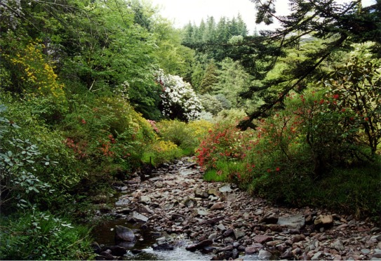 Crarae Burn flowing through the glen of Crarae Garden