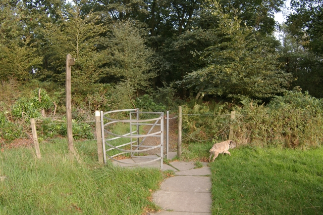 Gate into Witton Park