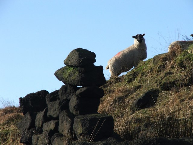 Drystone Wall Remnant and Sheep on Higher Moor.