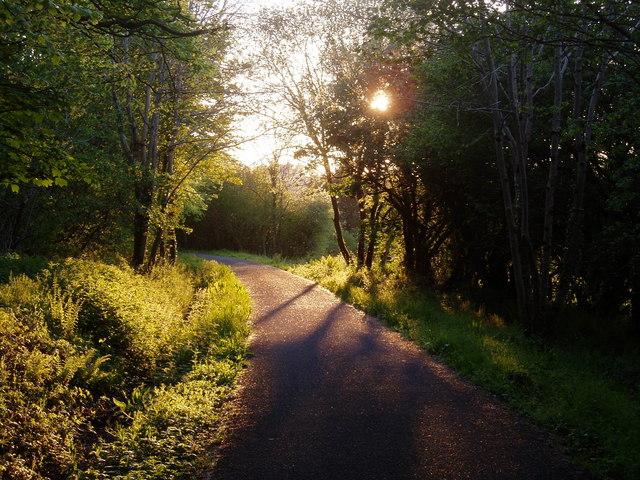 The Tarka Trail near Weare Giffard