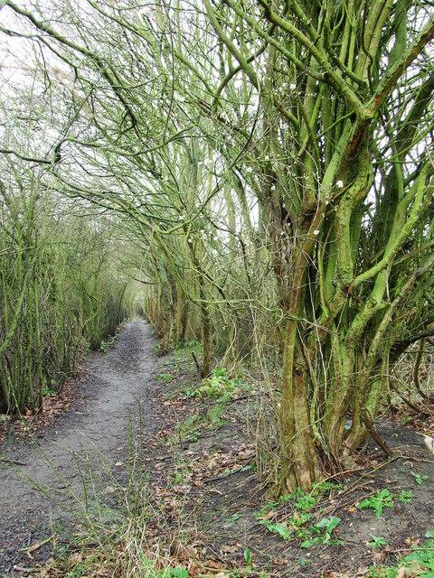 Harcamlow Way at Takeley