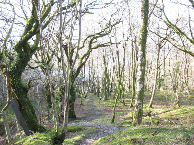 Footpath through Allt Wen woods