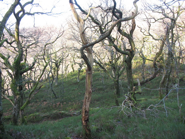 Wooded slope above Fachwen valley