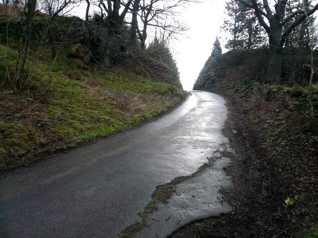 Milken Lane - Farhill Summit