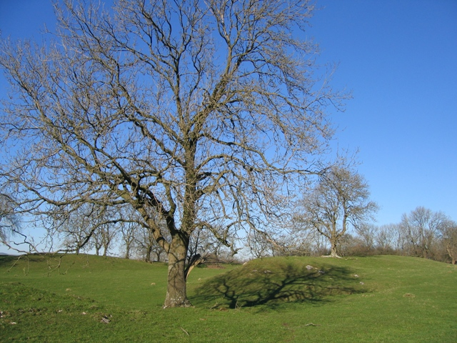 A Tree in the Limestone Pasture