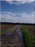 TM3696 : Transport Lane Loddon by Ray Garrod