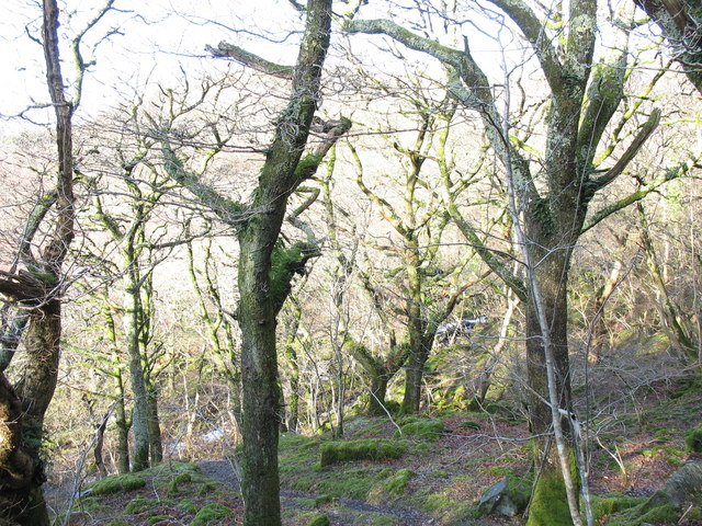 Sessile oak woodland