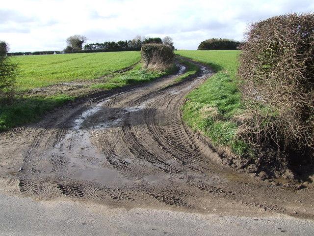 Farm Track, Hapton