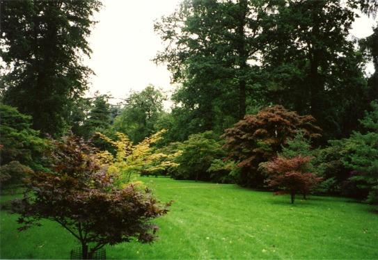 The Acer Glade at Westonbirt  Arboretum