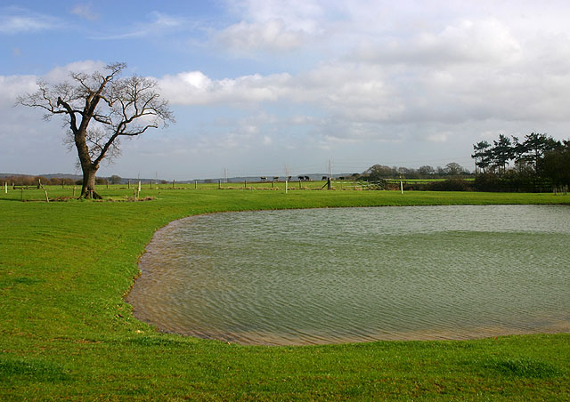 Pond at South Leigh