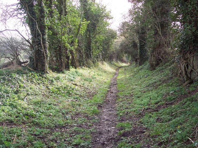 Bridleway near Chalk Pyt Farm