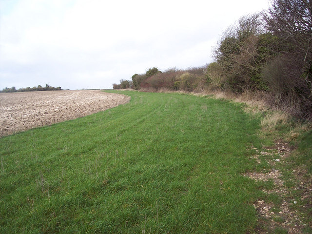 Field margin near Chalk Pyt Farm, Broad Chalke