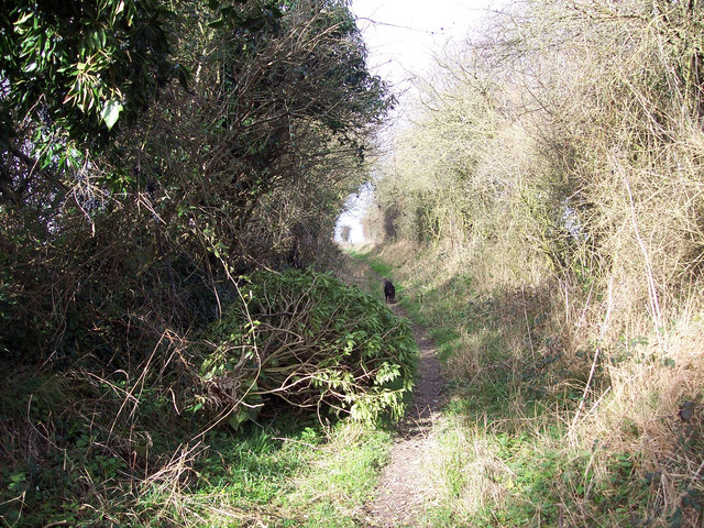 Hedged bridleway heading towards the Old Shaston Drove