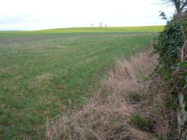 Farmland at Battle Moor
