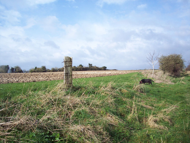 Lone post by bridleway, Gurston Down