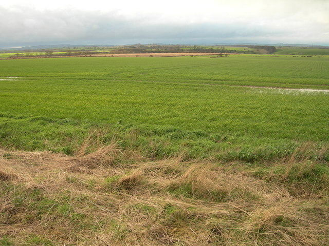 Farmland at Norham West Mains