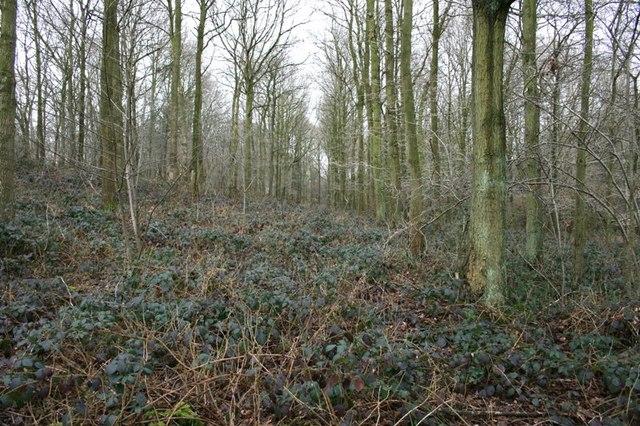Plantation Lanes, Impenetrable Brambles