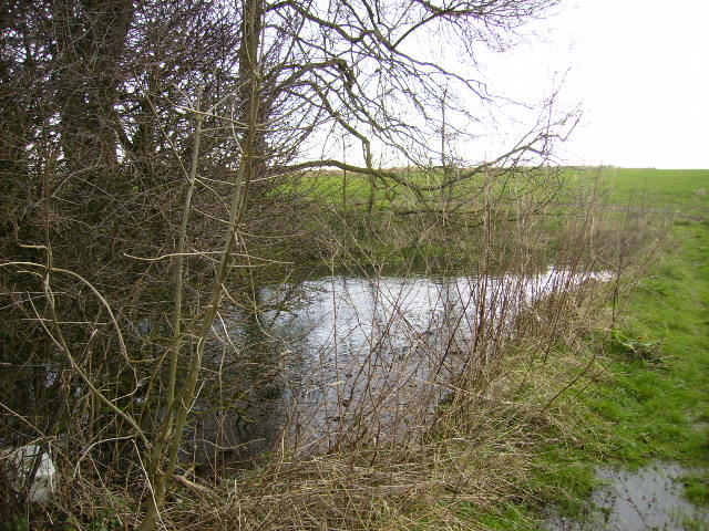 Small pond near Bridleway