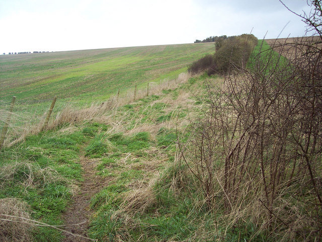 Bridleway between fields, Broad Chalke