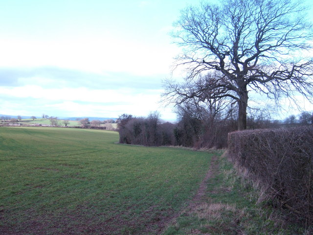 Field edge west of Bagwyllydiart